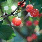 Just Cherry  by SuddenJim