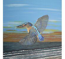 Kingfisher of Eftalou Photographic Print