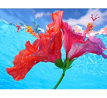 Floating Hibiscus Photographic Print