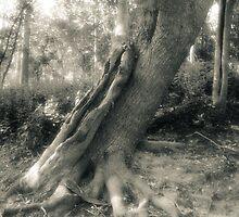 Tree On Grass Island by MLabuda