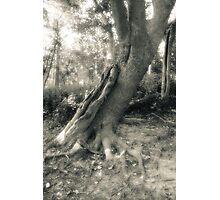 Tree On Grass Island Photographic Print