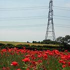 Naturally Electric by Sarah Jane Bingham