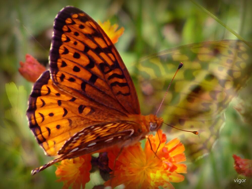 beautiful butterfly by vigor