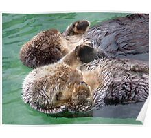Otters Holding Paws Poster