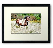 Pippin - Grayson Highlands Pony Stallion Framed Print