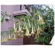 droopy flowers  Poster