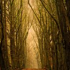 red path by LarsvandeGoor