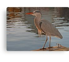 Norfolk Heron Metal Print
