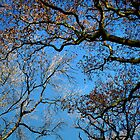 Blue Sky Trees by Karen Martin IPA