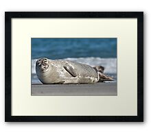 Cool Spotted Seal Framed Print