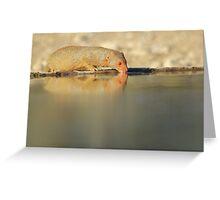 Slender Mongoose - Golden Glow of Joy and Life Greeting Card