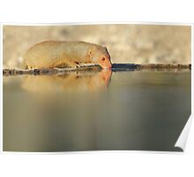 Slender Mongoose - Golden Glow of Joy and Life Poster