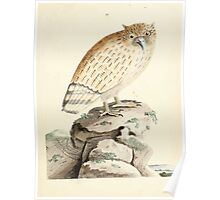 New Illustrations of Zoology Peter Brown 1776 0029 Birds Poster