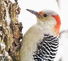 Just Another Woodpecker by lorilee