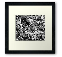 Black and White Beach Framed Print