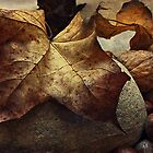 Autumn - a still life study by Julesrules