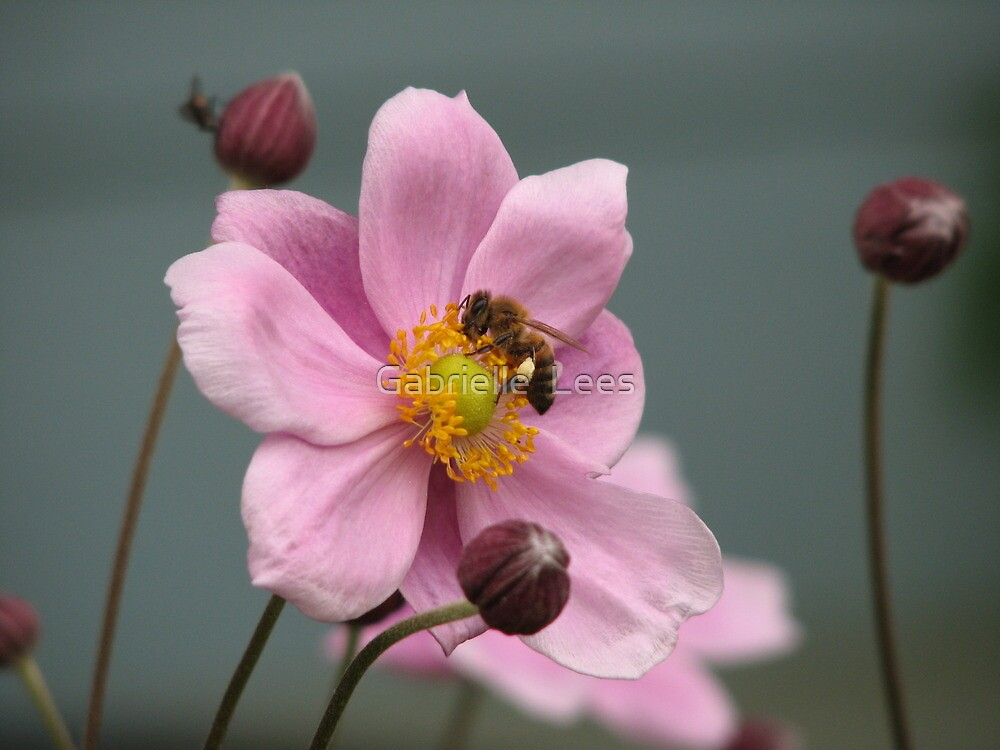 Work, Work, Buzz! Buzz! by Gabrielle  Lees