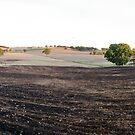 Drought, Floods then Fire by GailD