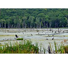 Great Blue Heron Gathering Photographic Print