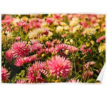 Butchart Garden Beauty Poster