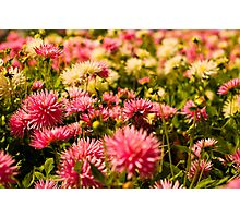 Butchart Garden Beauty Photographic Print
