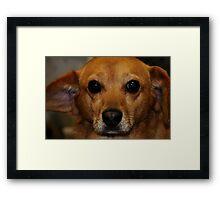 Rudy II Framed Print