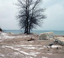 Along The Shore In December by kkphoto1