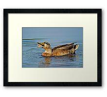 Feeding Duck Framed Print