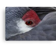 *Sandhill Crane at Rest*  Canvas Print