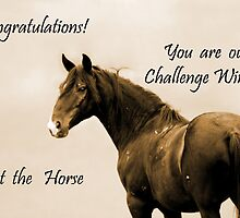 Challenge Banner Entry by Sue Ratcliffe