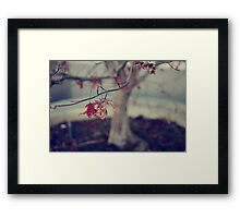 One Last Kiss Framed Print