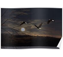 Bald Eagles in the Moonlight Poster