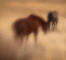 Following the Dream by KatsEyePhoto