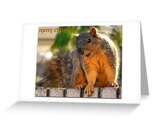 OMG, are those roasted nuts for me?!?! Greeting Card
