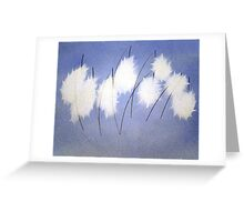 Hare Tail Cottongrass Greeting Card