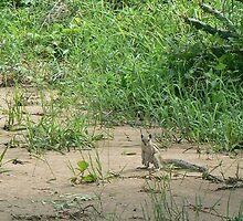 Poser Squirrel by gundip