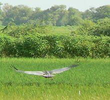 Flying away by gundip