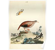 New Illustrations of Zoology Peter Brown 1776 0183 Birds Poster