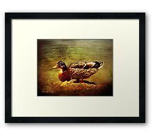 Along the backwater Framed Print