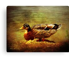 Along the backwater Canvas Print