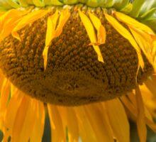 Last Breath of the Sunflower Sticker