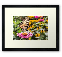 Tattered Wings of the Swallowtail Framed Print