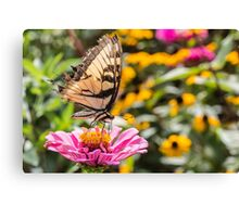Tattered Wings of the Swallowtail Canvas Print