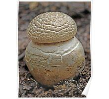 Strange Summer Fungi - Morwell National Park Poster