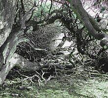 The Living Tree by Joni  Rae