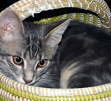Kitten in a Sewing Basket! by Brian Sharland