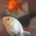 Fish by Mandy Kerr