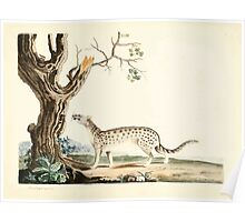 New Illustrations of Zoology Peter Brown 1776 0203 Mammals Poster