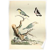 New Illustrations of Zoology Peter Brown 1776 0079 Birds Poster