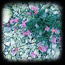 Magenta wild flowers by sue mochrie